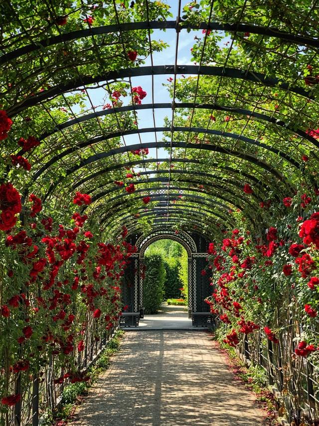 Magical Garden Features