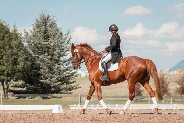 3 Important Parts of Horse Ownership